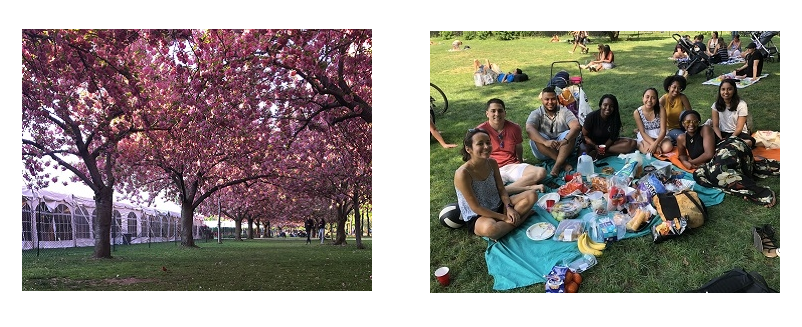 Cherry Blossoms in Prospect Park and Student in Central Park
